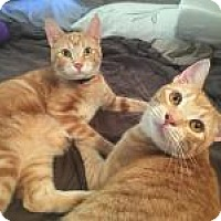 Adopt A Pet :: Butters and Barkley - Mission Viejo, CA