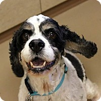 Adopt A Pet :: JAMES - Adoptioon Pending - Hurricane, UT