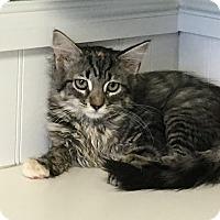 Adopt A Pet :: Dino - Covington, KY