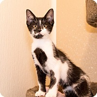 Adopt A Pet :: Gino - Seville, OH