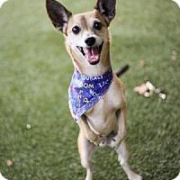 Adopt A Pet :: Possum - Lakeland, FL