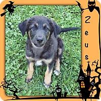 Adopt A Pet :: Zeus - Genoa City, WI