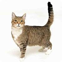 Adopt A Pet :: STERLING - San Francisco, CA
