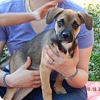 Adopt A Pet :: Bear (15 lb) Video! - Sussex, NJ