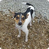 Adopt A Pet :: Sid - Wyanet, IL