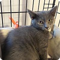 Adopt A Pet :: Dezi - Geneseo, IL
