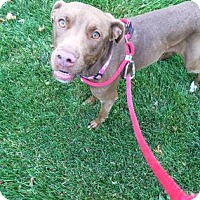 Labrador Retriever Mix Dog for adoption in Kansas City, Missouri - Ona
