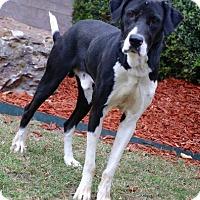 Adopt A Pet :: Belvedeere - Little Rock, AR