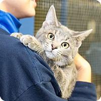 Adopt A Pet :: Pikachu - Seville, OH