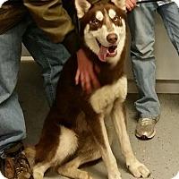 Adopt A Pet :: Miles - San Leon, TX