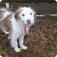 Adopt A Pet :: Mitzi - Albany, NY