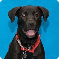 Adopt A Pet :: Enid - Livonia, MI