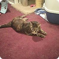 Adopt A Pet :: Armani - Fowlerville, MI