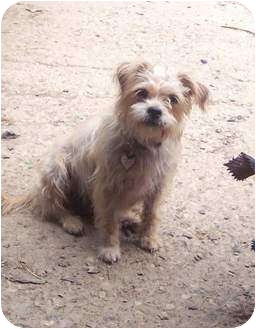 camme adopted dog mcarthur oh cairn terriershih