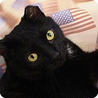 Adopt A Pet :: Rosie - Albany, NY