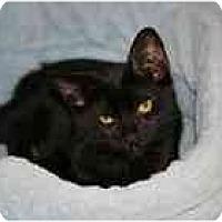 Adopt A Pet :: Isaac - Marietta, GA