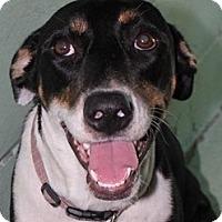 Adopt A Pet :: Calypso - Orlando, FL