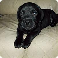 Adopt A Pet :: Dozer - Woodstock, ON