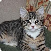 Adopt A Pet :: Bonnie (LE) - Little Falls, NJ