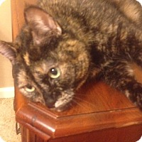 Adopt A Pet :: Luci in CT - East Hartford, CT