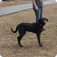 Adopt A Pet :: Slick - Broken Arrow, OK