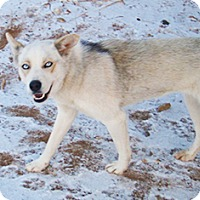 Adopt A Pet :: Rebel Rebel - Santa Fe, NM