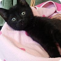 Adopt A Pet :: Parley - Kensington, CT
