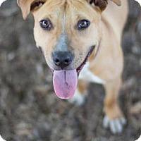 Adopt A Pet :: Adriana - Bradenton, FL