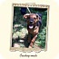 Adopt A Pet :: Cowboy (POM DC) - Washington, DC