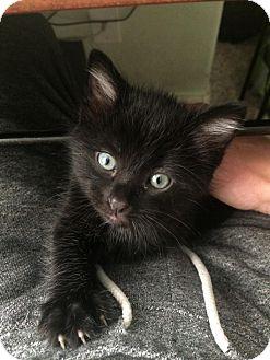 Loveland Co Cat Rescue