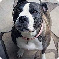 Adopt A Pet :: Garbo - Bruce Township, MI