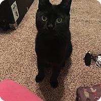 Adopt A Pet :: Zeta - New Orleans, LA