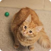 Adopt A Pet :: Dominic - Naperville, IL
