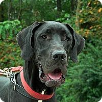 Adopt A Pet :: Pandora - Manassas, VA