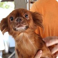 Adopt A Pet :: Ursula - Harmony, Glocester, RI