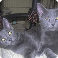 Adopt A Pet :: TIMMIE and Sydney fee waived - Witter, AR