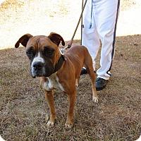 Adopt A Pet :: 16D-1769 (11/28) - Rome, GA