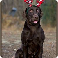 Adopt A Pet :: Macie - Dixon, KY