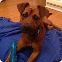 Adopt A Pet :: Willie - Columbus, OH