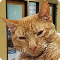 Adopt A Pet :: Bob - Auburn, CA