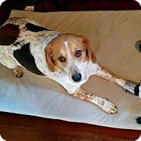 Adopt A Pet :: Marley - Farmington, MI