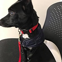Adopt A Pet :: Max/Churro - Indianapolis, IN