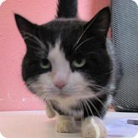 Adopt A Pet :: Klondike - Reeds Spring, MO