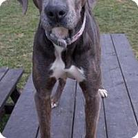 Adopt A Pet :: Fritz - Fairfax, VA