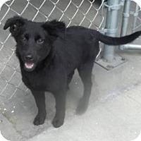 Adopt A Pet :: Terry - South Jersey, NJ