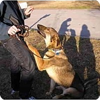Adopt A Pet :: Amos - Green Cove Springs, FL