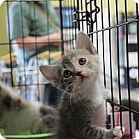 Adopt A Pet :: Peaches - Santa Monica, CA