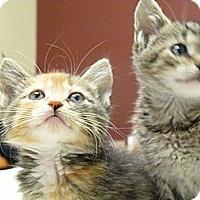Adopt A Pet :: Sunburst & Tibby - Chicago, IL