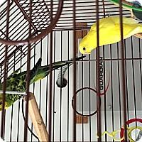 Adopt A Pet :: Sunny & Speedy - Punta Gorda, FL