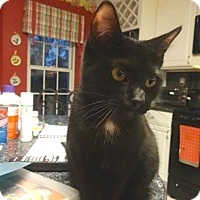 Adopt A Pet :: Snickers - Colmar, PA